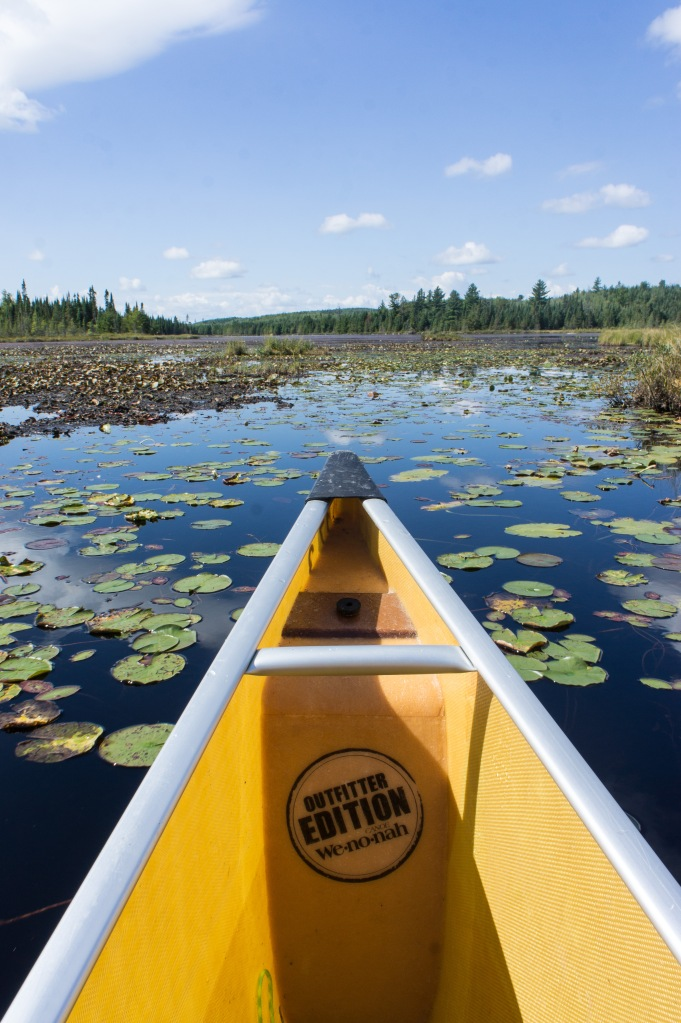 Bog canoeing