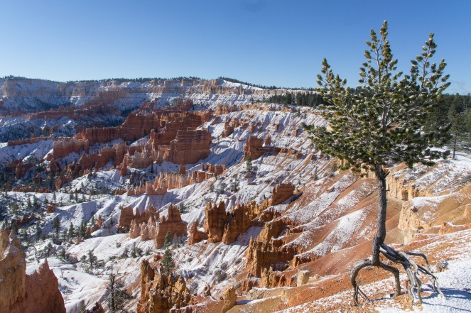 Rob is obsessed with this tree. It's roots show where the canyon rim used to be.