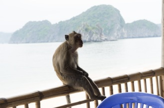 One of the monkeys introduced to Monkey Island. Rob and I were greatly entertained watching them terroize some of the other tourists who got too close. One stole a water bottle and tried to take a purse.