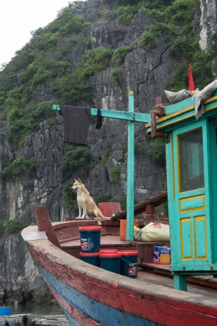 Every home in the floating village has a guard dog in lieu of locks.